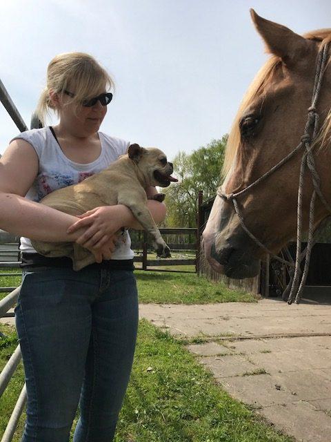 Fremdes pferd kennenlernen